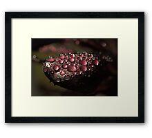 Nature's Bling II ~ Framed Print