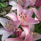 pink lilies by Oil Water Artt