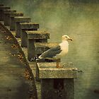 The seagull by rentedochan