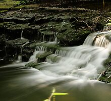 Jesmond Dene Stream by Harry Purves