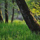 Wood by jimmylu