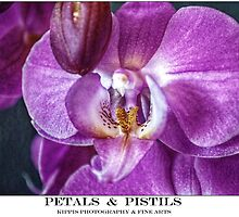 orchid by kippis