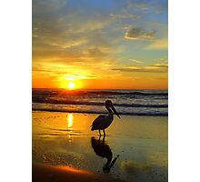 Pelican at Sunrise, Manly Beach, Sydney, NSW, Australia Photographic Print