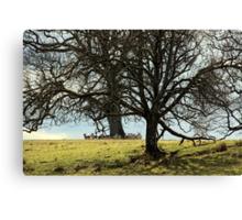 Hidden Herd Canvas Print