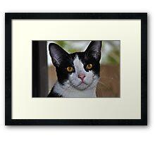 """"""" Tuxedo """" Framed Print"""