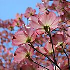 Dogwood Flowers Pink Dogwoods Tree art Baslee Troutman by BasleeArtPrints