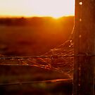 Rustic Sunset by Lozzar Landscape