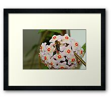 Tucking in... Framed Print