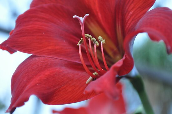 Bright and Beautiful Bloom by Larissa Kerkow