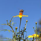 The Bee's Knees by Margi