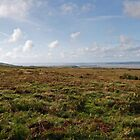 The Gower Landscape by cofiant