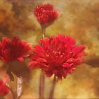 Red Chrysanthemum by zzsuzsa