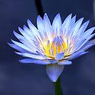 Les Fleurs by Jason Dymock Photography