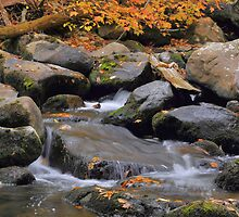 Smokey Mountain Stream Detail by Stephen Vecchiotti