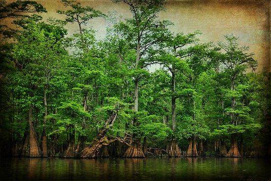 River Beauty by Jonicool