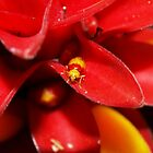 Red and Yellow bug by Jason Dymock