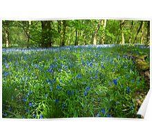 Spring Wood Poster