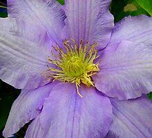 """""""Am I Blue?"""" (floral love song) by tanithastlik"""