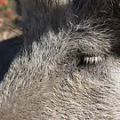 It's a pigs life! by lutontown
