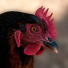 Chicken Portrait by deze