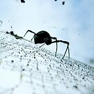 Spider on wet web. by Julie Sleeman