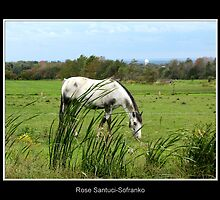 Horse in a field by Rose Santuci-Sofranko