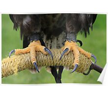 Eagle Talons Poster