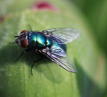 fly on bud  by yampy