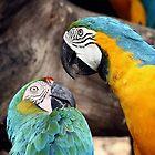 The battle of the beaks. by debjyotinayak