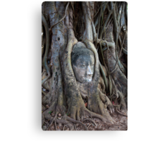 Buddha Head in Tree Canvas Print