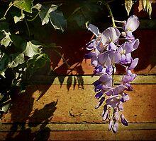 Heat and Shadows by hampshirelady