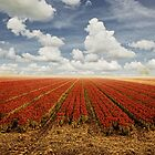 Tulips & Clouds by LarsvandeGoor