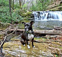 Bailey by Avery Creek Waterfall #2 by Chris Snyder