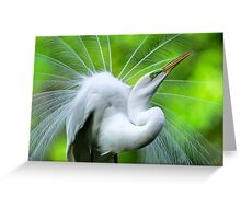 Breeding Egret Eye to the Sky Greeting Card
