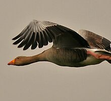 Going for a Gander by kelclay