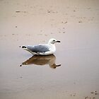 Bird in Reflection by Jason Dymock