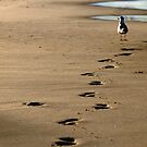 Not my Footprints by Jason Dymock