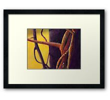 Vine on a porch Framed Print