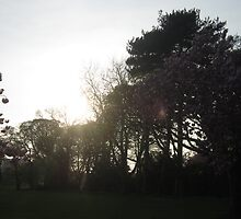 Spring Evening by Conor Gilmour