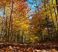 Abandoned Road in Autumn, Adirondacks by Michael Irrera