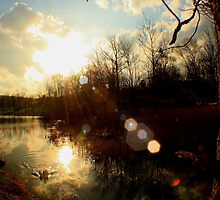 Pond Sunset by Melissa Ann Blair