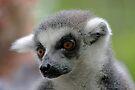 Ring-Tailed Lemur 2 by Leanne Allen