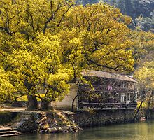 Tree by the River by dlwjiang