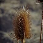 Natures Spikes by Noodlediggity