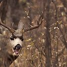 Bored Muley by JamesA1