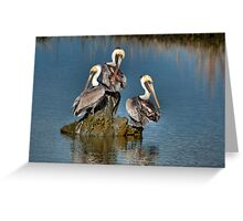 Three Pelicans Preening Greeting Card