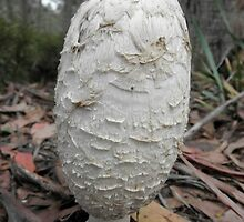 Giant Fungi, Cradle Mountain Road, Tasmania, Australia. by kaysharp