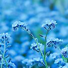 Blue Reminescence - Forget-me-not by Marina Herceg
