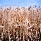 Grasses at Dusk by Beth Jennings