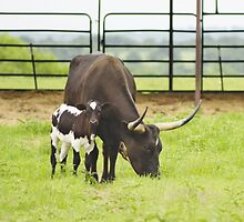 Longhorns on Mother's Day by kristijohnson